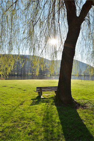 Weeping Willow with Bench and Sun in Spring, Laudenbach, Churfranken, Spessart, Bavaria, Germany Stock Photo - Rights-Managed, Code: 700-08231164