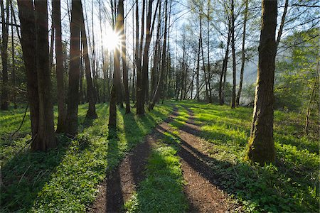 Path through Trees with Sun in Spring, Faulbach, Churfranken, Spessart, Miltenberg-District, Bavaria, Germany Stock Photo - Rights-Managed, Code: 700-08231179