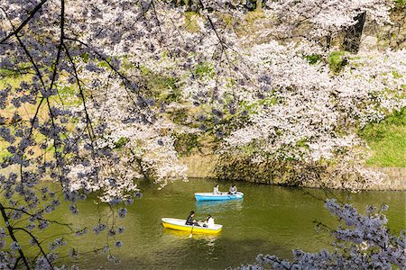 picture - Blooming Cherry Trees and Rowing Boats along Moat, Kitanomaru Park near the Imperial Palace, Chiyoda, Tokyo, Japan Stock Photo - Rights-Managed, Code: 700-08274179