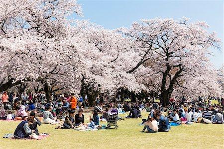 Blooming Cherry Trees at Shinjuku Gyoen National Garden, Shinjuku, Tokyo, Japan Stock Photo - Rights-Managed, Code: 700-08274303