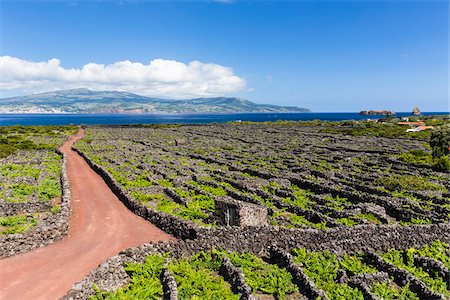 Rural road leading through wine growing fields with lava stone walls for shelter, view of Faial in the distance, Pico Island, Azores, Portugal Stock Photo - Rights-Managed, Code: 700-08540089