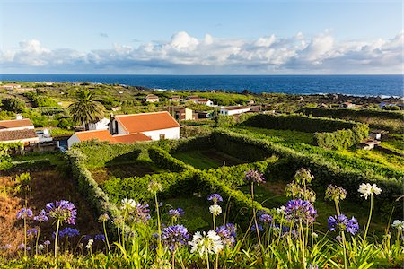 Houses and Square Fields with Stone Walls for Sheltering the Wine Grapes, Biscoitos, Praia da Vitoria, Terceira Island, Azores, Portugal Stock Photo - Rights-Managed, Code: 700-08540211