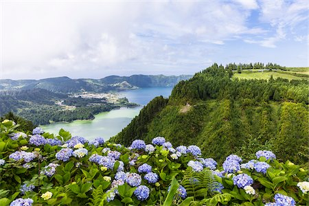 Hortensia in bloom with view of the crater lakes of Sete Cidades, Ponta Delgada, Island of Sao Miguel, Azores, Portugal Stock Photo - Rights-Managed, Code: 700-08567264