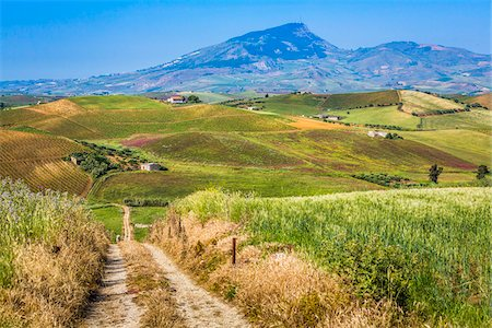 Scenic vista of farmland with vineyards and fields of crops and dirt road near Calatafimi-Segesta in the Province of Trapani in Sicily, Italy Stock Photo - Rights-Managed, Code: 700-08701963