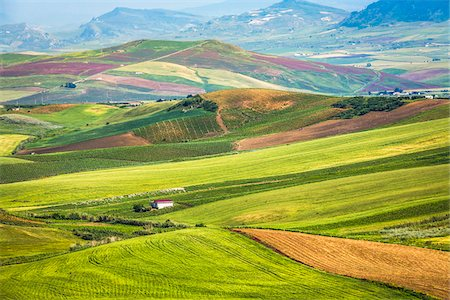 Overview of farmland with grassy fields and crops near Calatafimi-Segesta in the Province of Trapani in Sicily, Italy Stock Photo - Rights-Managed, Code: 700-08701978