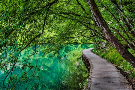 Trees hanging over a footbridge at Plitvice Lakes National Park in Lika-Senj county in Croatia Stock Photo - Rights-Managed, Code: 700-08765476