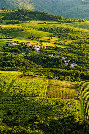 Overview of farmland and vineyards near Motovun in Istria, Croatia Stock Photo - Rights-Managed, Code: 700-08765517