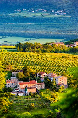 Scenic overview of homes and vineyards at sunrise near the medieval town of Motovun in Istria, Croatia Stock Photo - Rights-Managed, Code: 700-08765521