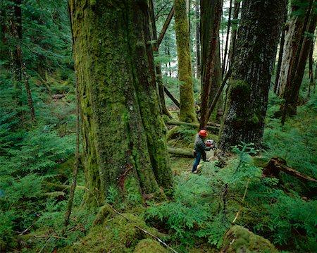 Tree Cutting near Prince Rupert British Columbia, Canada Stock Photo - Rights-Managed, Code: 700-00014933