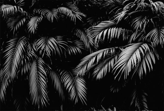 Close-Up of Palm Trees Stock Photo - Premium Rights-Managed, Artist: Peter Griffith, Image code: 700-00029447