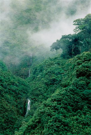 Cloud Forest Andes Mountains Napo Province, Ecuador Stock Photo - Rights-Managed, Code: 700-00023230