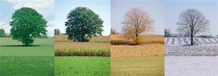 Tree in Spring, Summer, Autumn And Winter Stock Photo - Rights-Managed, Code: 700-00053425