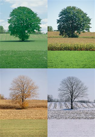 Tree in Spring, Summer, Autumn And Winter Stock Photo - Rights-Managed, Code: 700-00053679