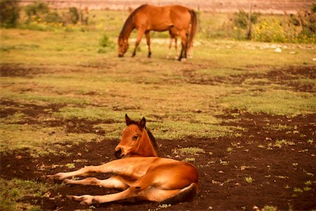 Horses Stock Photo - Rights-Managed, Code: 700-00158867