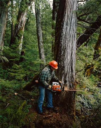 Logging Stock Photo - Rights-Managed, Code: 700-00159130