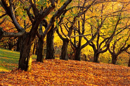Grove of Trees in Autumn High Park Toronto, Ontario, Canada Stock Photo - Rights-Managed, Code: 700-00184134