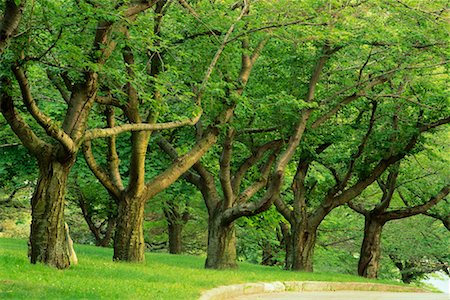 Grove of Trees in Summer High Park Toronto, Ontario, Canada Stock Photo - Rights-Managed, Code: 700-00184136
