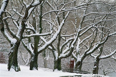 Grove of Trees in Winter High Park Toronto, Ontario, Canada Stock Photo - Rights-Managed, Code: 700-00184137