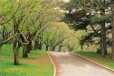 Tree-Lined Road in Springtime High Park Toronto, Ontario, Canada Stock Photo - Rights-Managed, Code: 700-00184139