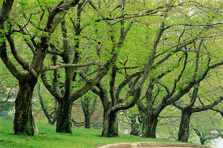 Grove of Trees in Springtime High Park Toronto, Ontario, Canada Stock Photo - Rights-Managed, Code: 700-00184133
