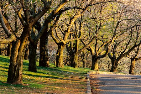 Tree-Lined Road in Springtime High Park Toronto, Ontario, Canada Stock Photo - Rights-Managed, Code: 700-00184140