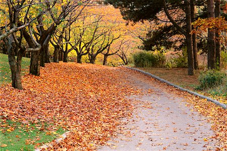 Tree-Lined Road in Autumn High Park Toronto, Ontario, Canada Stock Photo - Rights-Managed, Code: 700-00184141