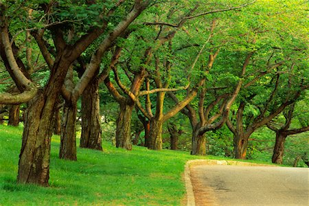 Tree-Lined Road in Summer High Park Toronto, Ontario, Canada Stock Photo - Rights-Managed, Code: 700-00184142