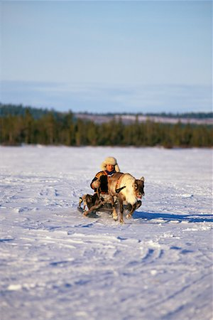 Laplander with Reindeer Lapland, Sweden Stock Photo - Rights-Managed, Code: 700-00186710