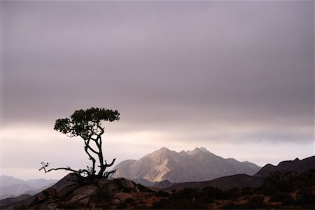 Richtersveld National Park South Africa Stock Photo - Rights-Managed, Code: 700-00186904