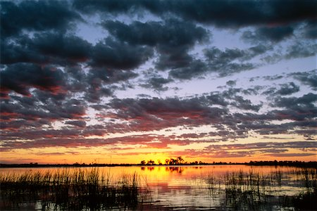 Okavango Delta Botswana Stock Photo - Rights-Managed, Code: 700-00186994