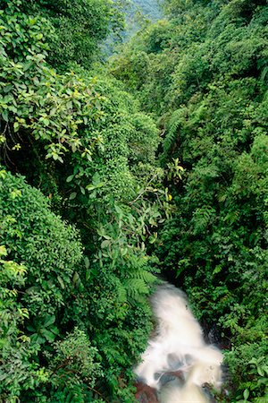 Forest Andes Mountains Napo Province, Ecuador Stock Photo - Rights-Managed, Code: 700-00181779