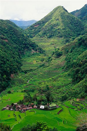 philippine terrace farming - Small Terrace-Farming Town Philippines Stock Photo - Rights-Managed, Code: 700-00183719