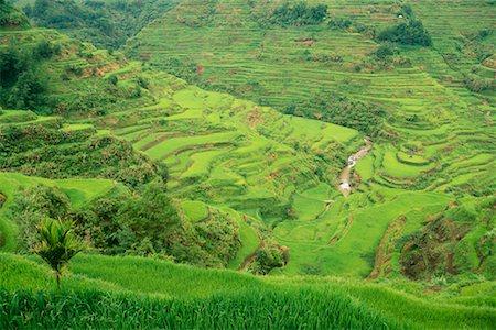 philippine terrace farming - Banaue Rice Terraces Banaue, Ifugao Philippines Stock Photo - Rights-Managed, Code: 700-00183721