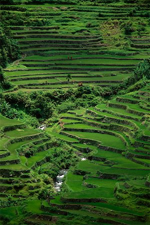 philippine terrace farming - Banaue Rice Terraces Banaue, Ifugao Philippines Stock Photo - Rights-Managed, Code: 700-00183722