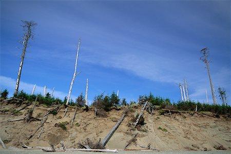 Deforestation British Columbia, Canada Stock Photo - Rights-Managed, Code: 700-00281092