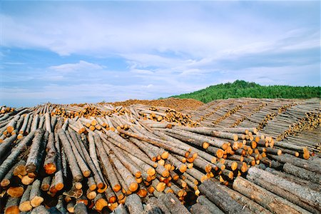 Piles of Logs, Quebec, Canada Stock Photo - Rights-Managed, Code: 700-00425378