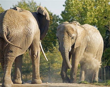 Elephants Stock Photo - Rights-Managed, Code: 700-00430127