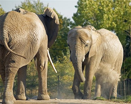 Elephants Stock Photo - Rights-Managed, Code: 700-00430127