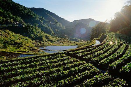 philippine terrace farming - Banaue Rice Terrace, Ifugao, Philippines Stock Photo - Rights-Managed, Code: 700-00555227