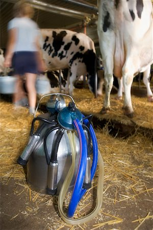 Portable Milking Machine in Barn Stock Photo - Rights-Managed, Code: 700-00651289