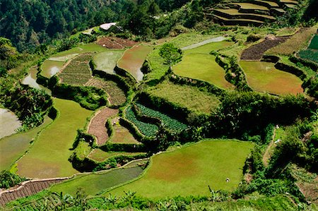 philippine terrace farming - Rice Terraces, Halsema Highway, Benquet, Mountain Province, Luzon Philippines Stock Photo - Rights-Managed, Code: 700-00910877