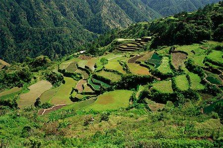 philippine terrace farming - Rice Terraces Along Halsema Highway, Benguet, Luzon, Philippines Stock Photo - Rights-Managed, Code: 700-00910878