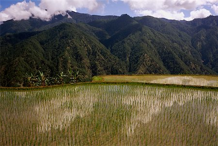 philippine terrace farming - Terraced Rice Fields, Halsema Highway, Luzon, Philippines Stock Photo - Rights-Managed, Code: 700-00910871