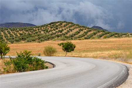 simsearch:845-03720933,k - Olive Groves, Andalucia, Spain Stock Photo - Rights-Managed, Code: 700-00933701