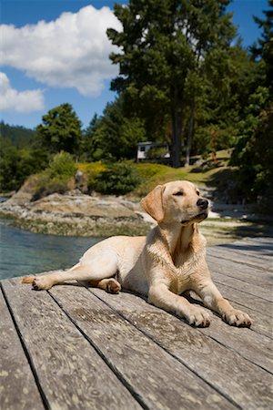 Dog Lying On Dock Stock Photo - Rights-Managed, Code: 700-01014525