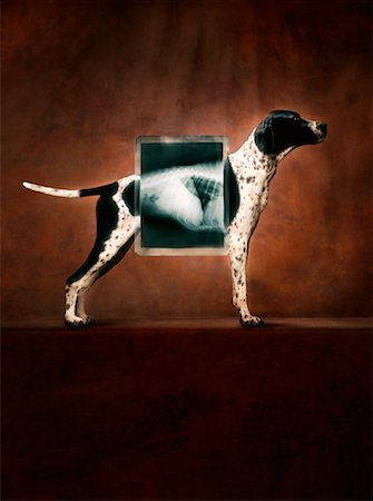 dog x-ray - Dog Standing Behind X-ray Stock Photo - Rights-Managed, Code: 700-01112227