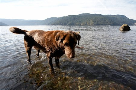 Dog in Lake Stock Photo - Rights-Managed, Code: 700-01183105