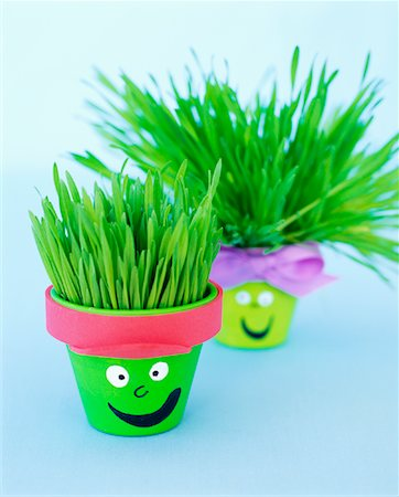 Potted Wheatgrass Stock Photo - Rights-Managed, Code: 700-01295906
