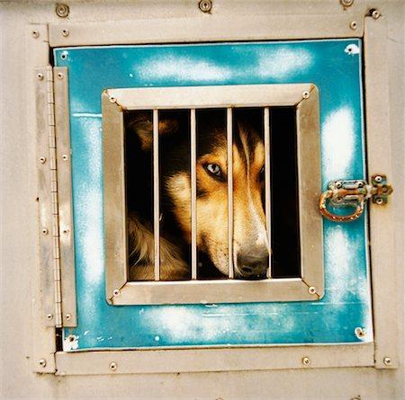 Dog Locked Up Stock Photo - Rights-Managed, Code: 700-01459104