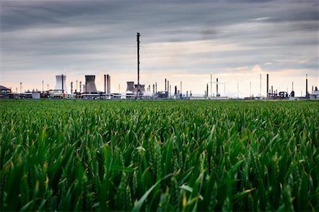 Grangemouth Petrochemical Plant in Background and Wheat Field in Foreground, West Lothian, Scotland, UK Stock Photo - Rights-Managed, Code: 700-01538904